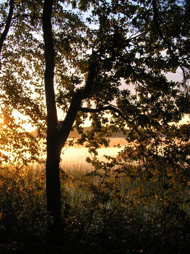 Утро на рыбалке. Автор фото: Константин Вишератин