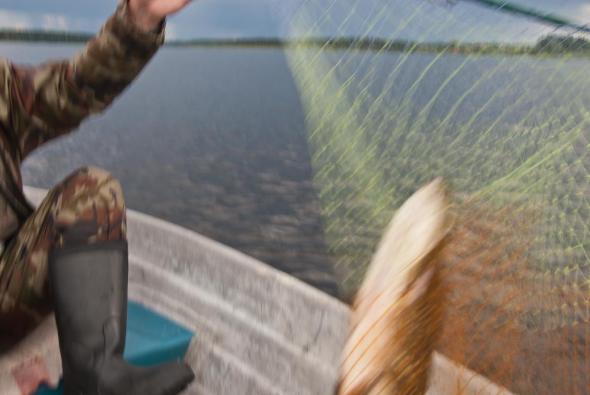 Крокодил в лодке - у нас переполох!. Автор фото: Вячеслав Степанов