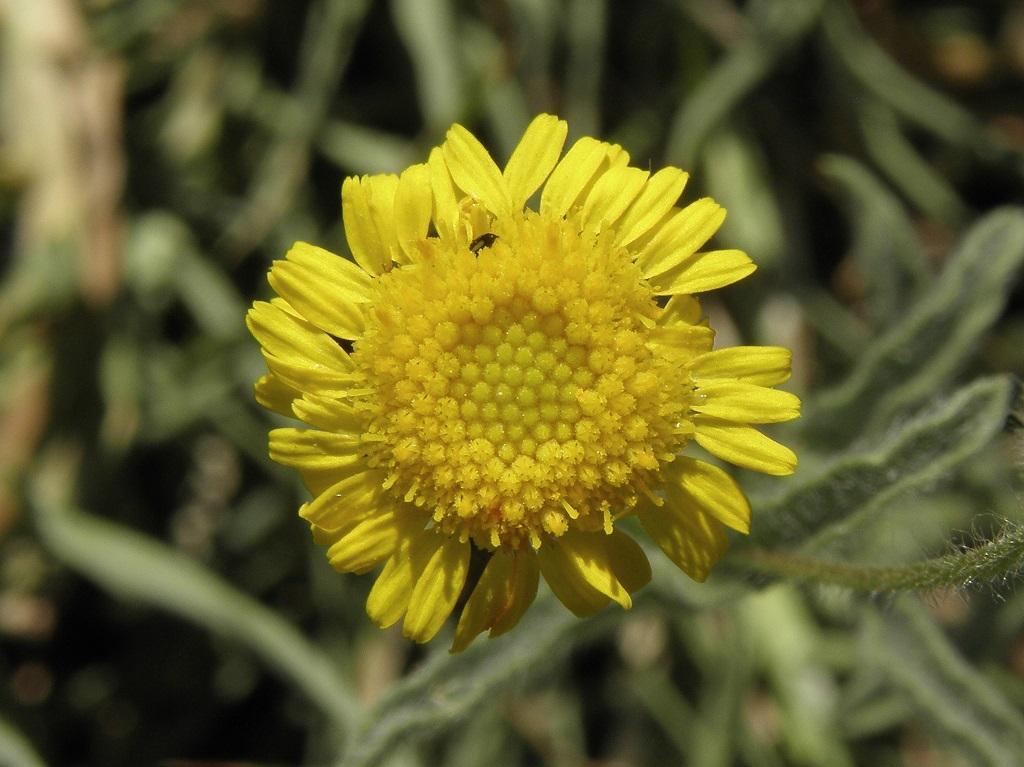 Растения найдены не далеко от города Ашдод. В апреле на дне пересыхающей речки Лахиш. Автор фото: Александр Гибхин