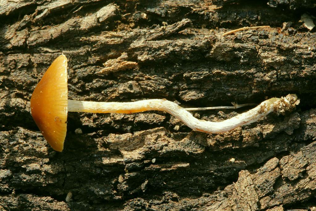 Поляна в хвойном лесу рядом с городом Модиин. Начало января. 2019 г. Автор фото: Александр Гибхин
