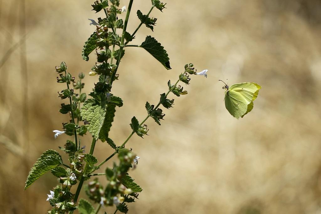 Бабочки в полёте. Автор фото: Александр Гибхин
