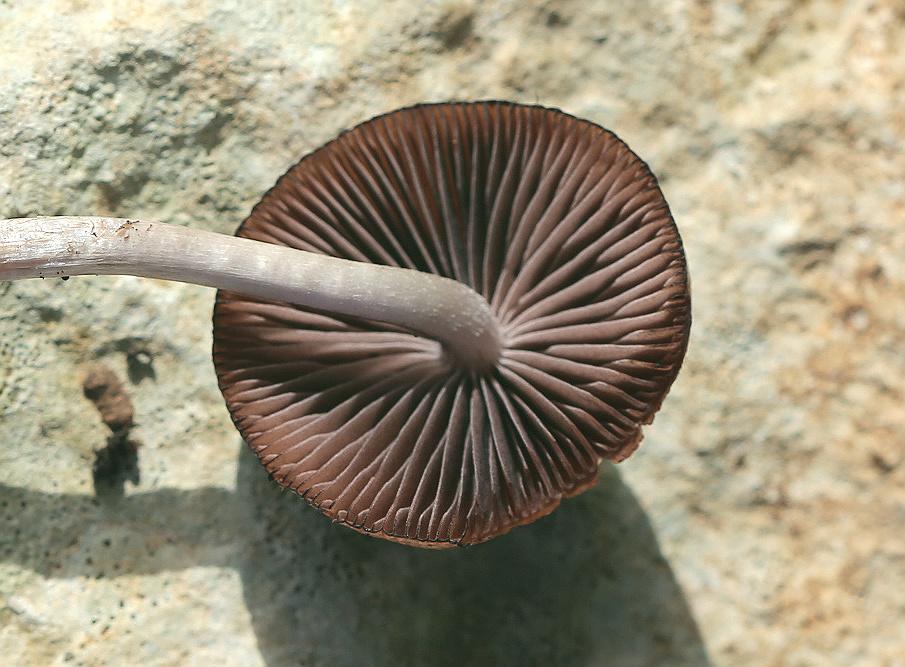 Грибы найдены в разные годы на горе Кармель на севере Израиля. Автор фото: Александр Гибхин