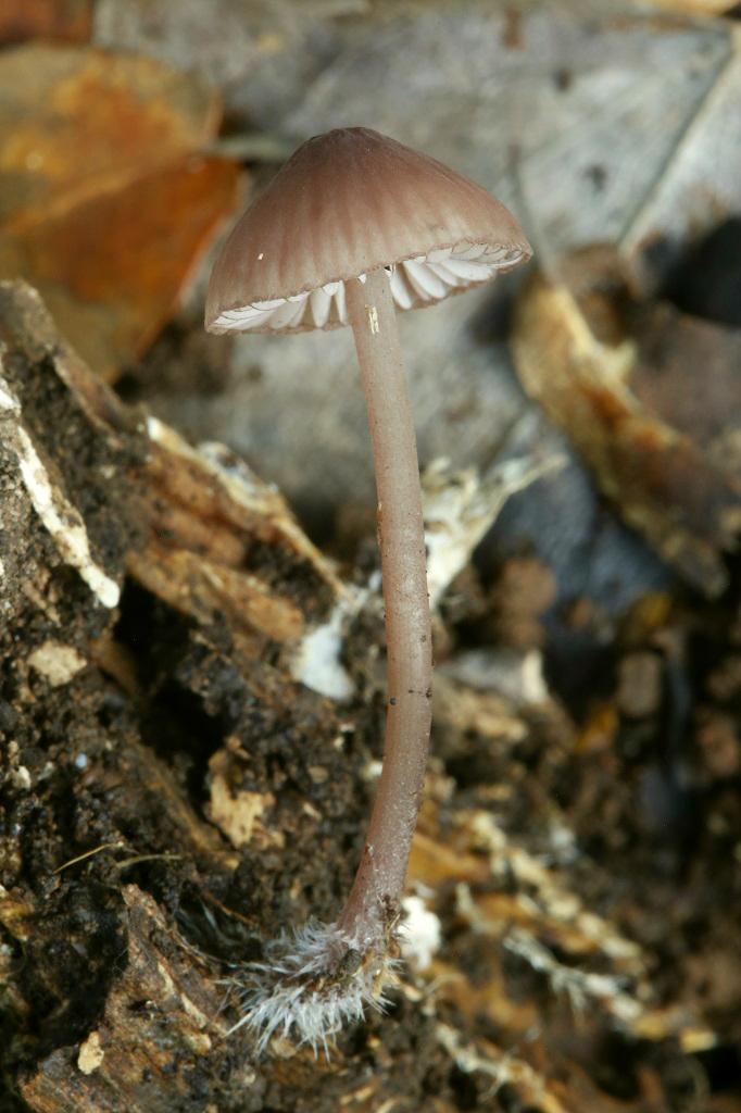 Эти грибы растут в лесах севера Израиля. Автор фото: Александр Гибхин