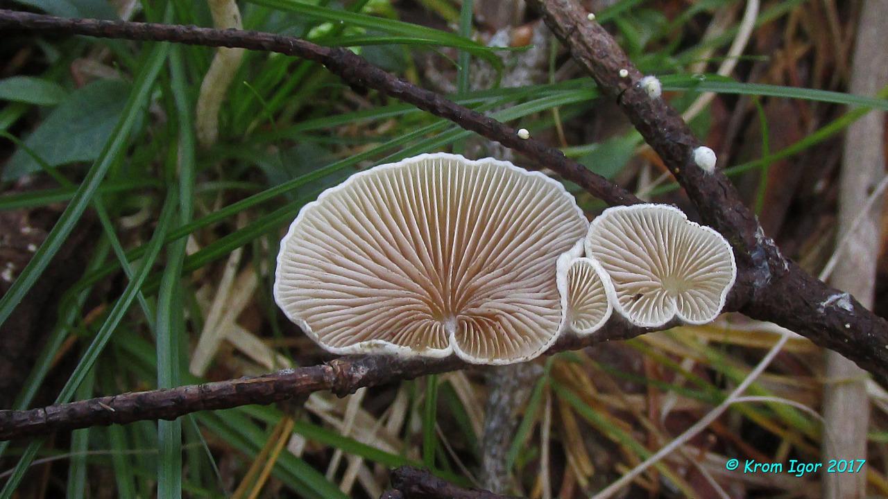 На мелких растительных остатках Автор фото: Кром Игорь