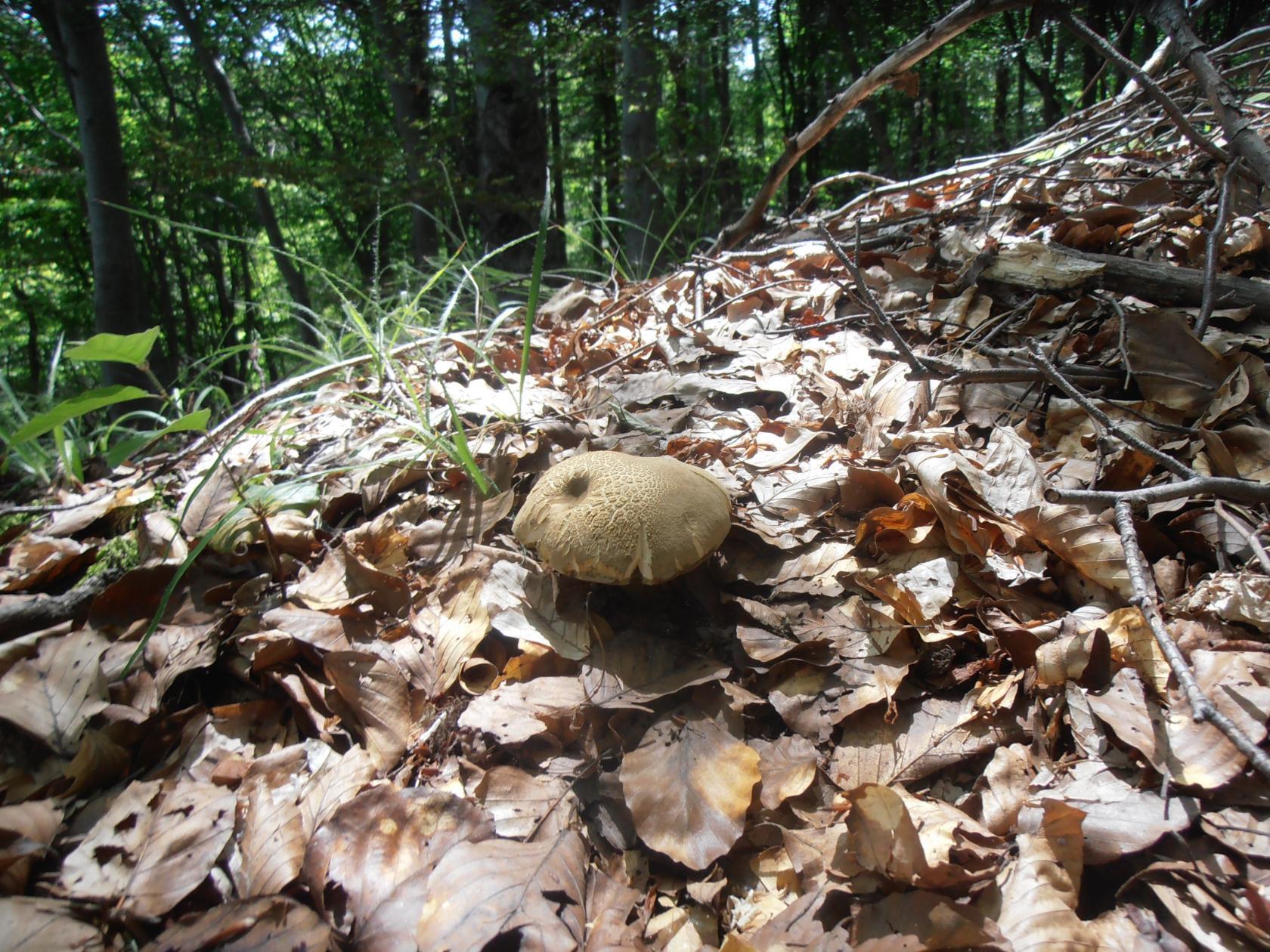 горный массив Витоша, Буковый лес Автор фото: Кирилова Любовь