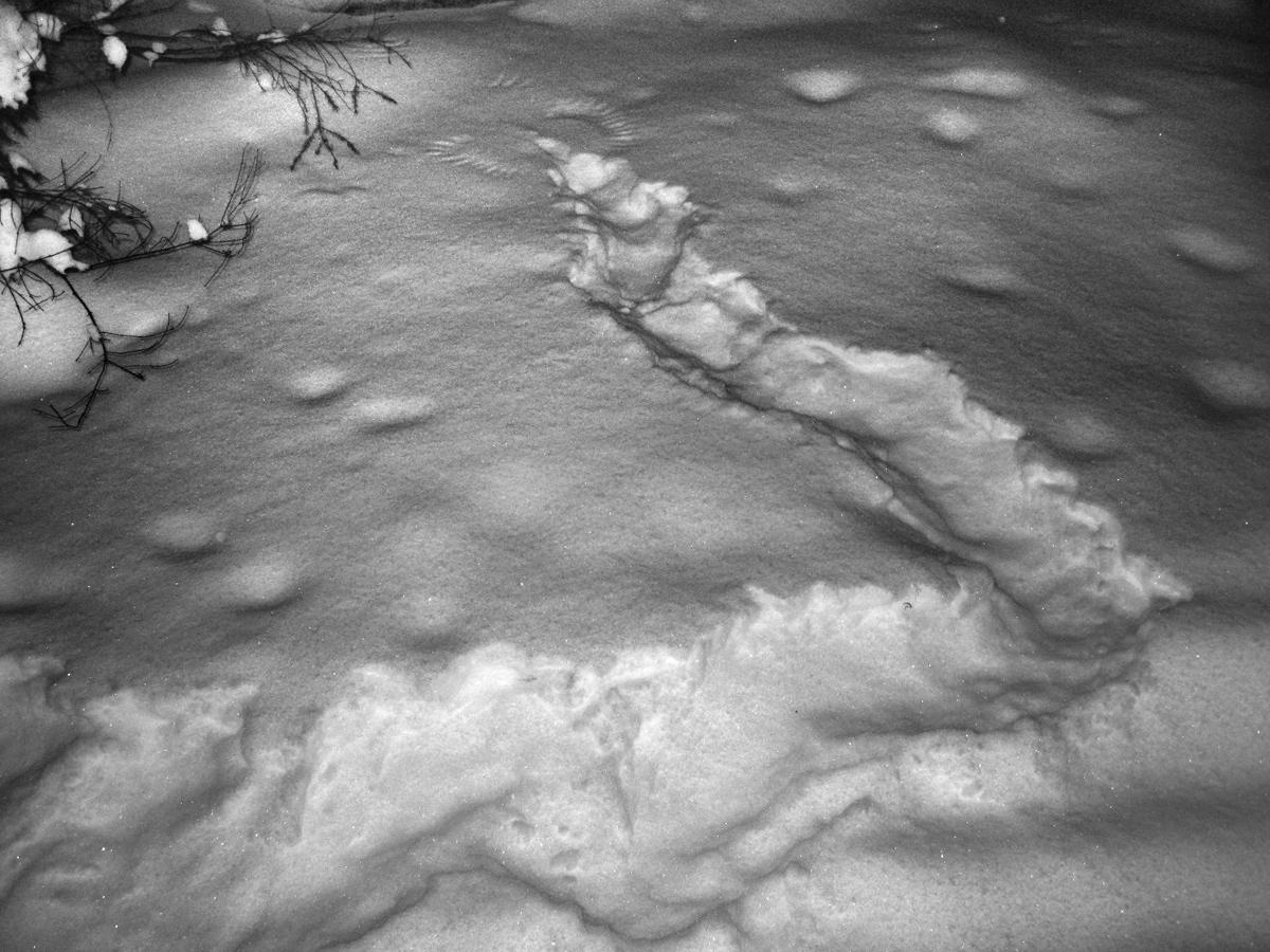 След рябчика на снегу получается так: птица ныряет в снег, там ночует, а затем передвигается под снегом, прорывая туннель и вылетает в нескольких метрах от места ночевки. Делается это для защиты от хищников. Если снег сыпучий, верхняя часть туннеля обваливается, получается канавка. В конце канавки - следы крыльев. Московская область, Дмитровский район, январь 2013 Автор фото: Кудрявцева Татьяна