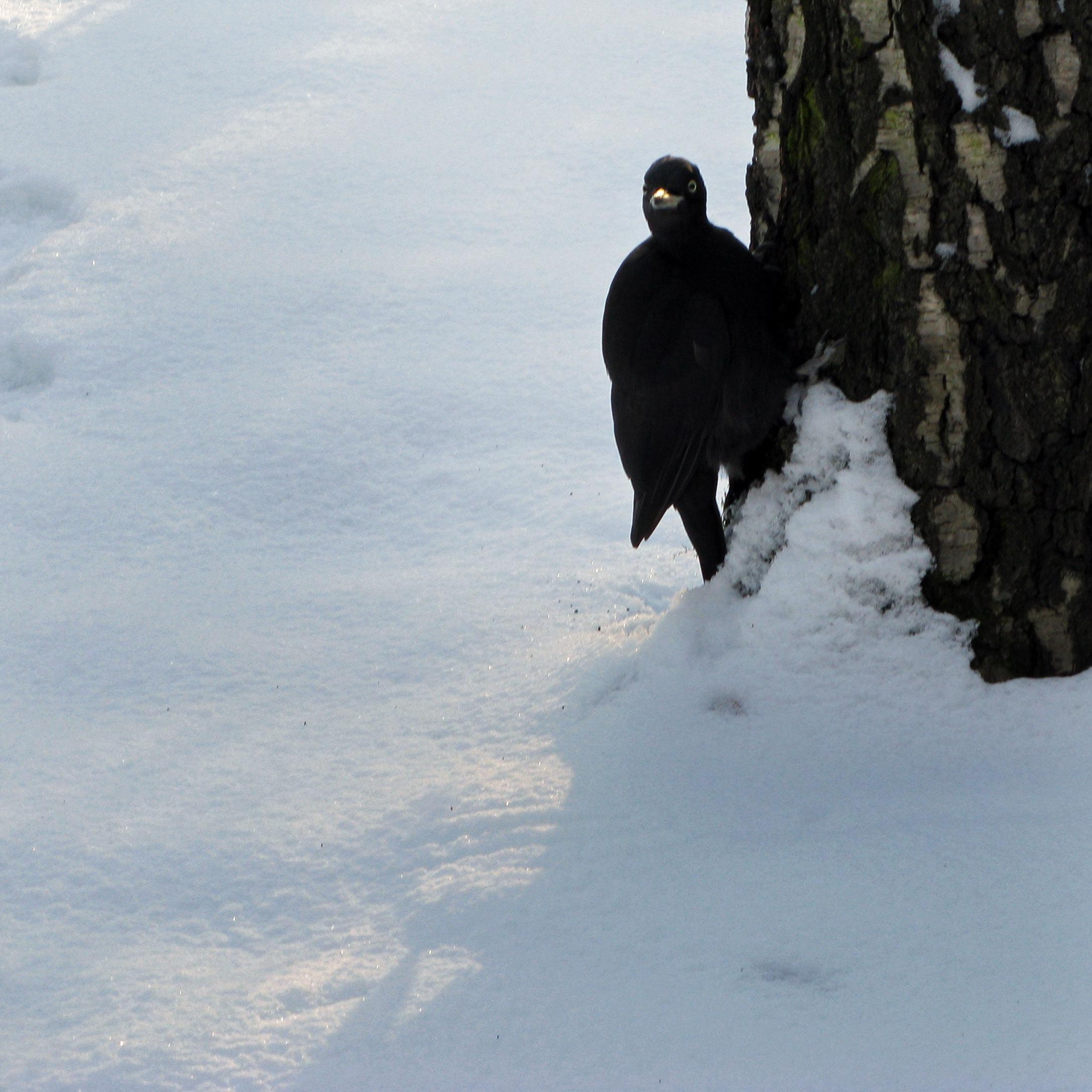 Эта самка позировала мне в Сокольниках. Я целый час не могла от нее оторваться, кажется, даже ноги поморозила. Автор фото: Кудрявцева Татьяна