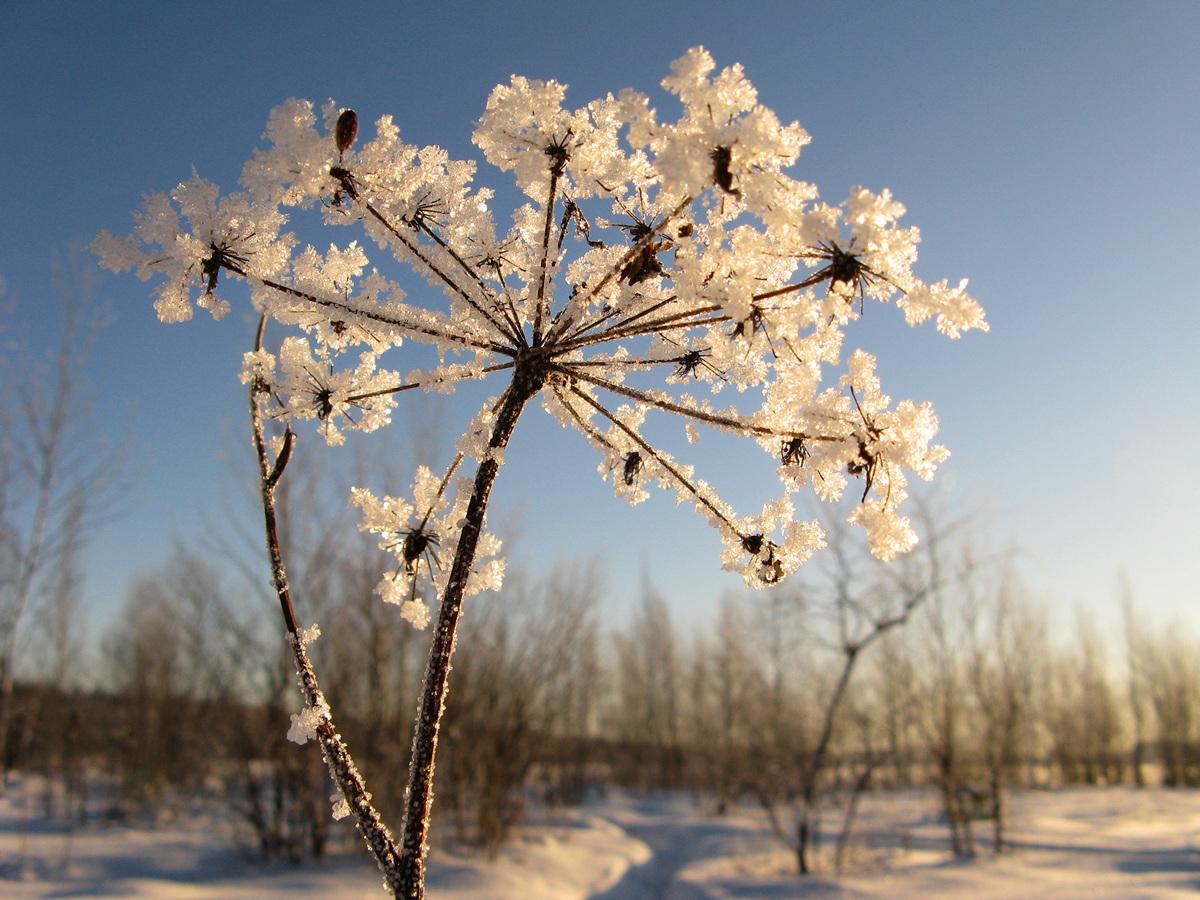Зимние цветы. Автор фото - Татьяна Кудрявцева