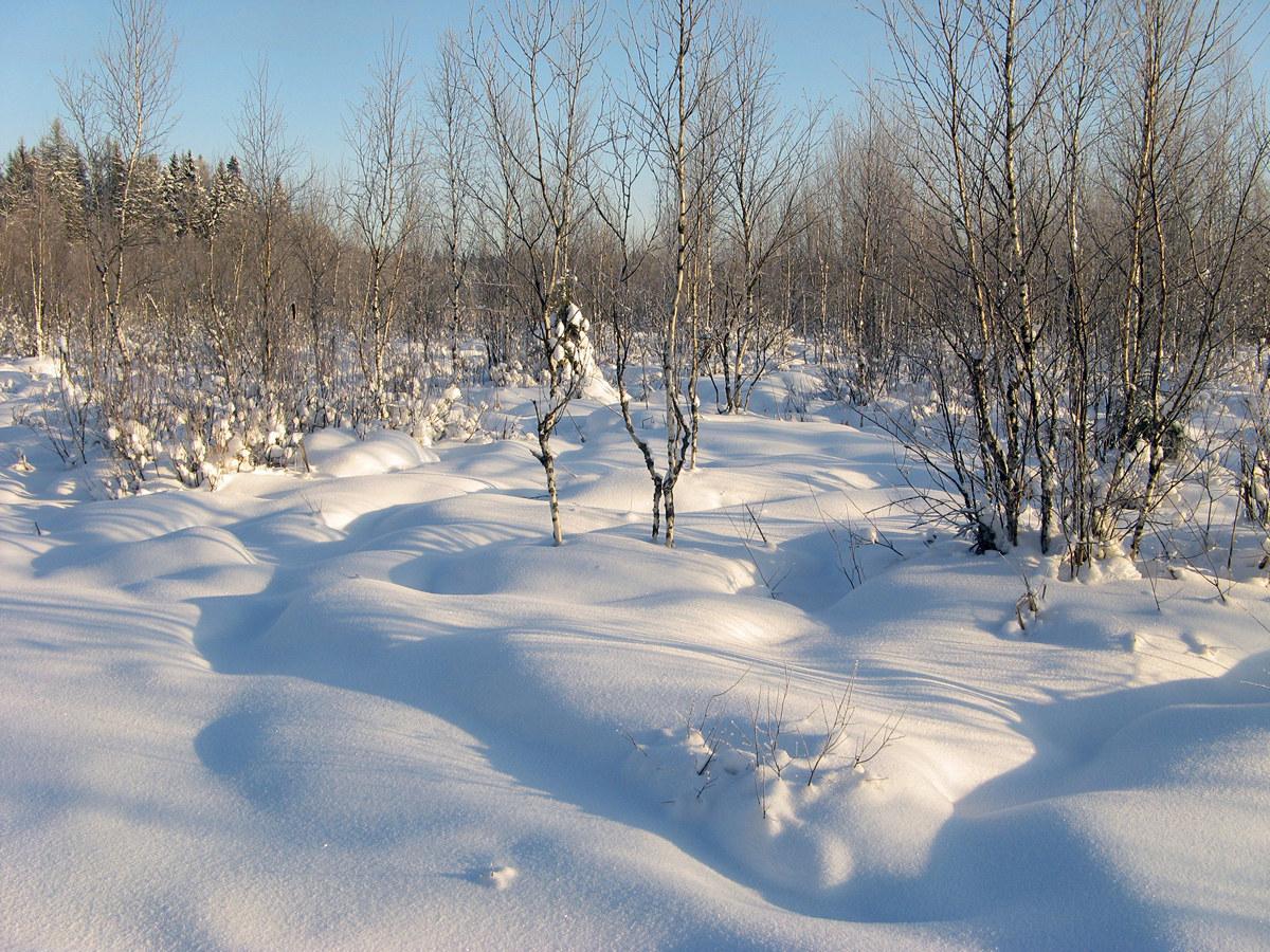 Болотные кочки под снегом. Автор фото - Татьяна Кудрявцева