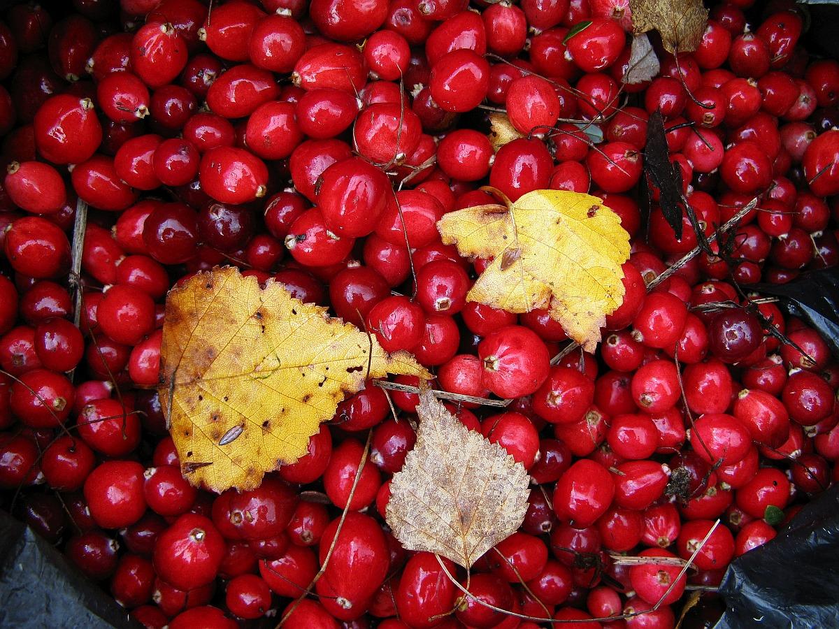 Московская область, Дмитровский район, 1 октября 2011. Автор фото: Кудрявцева Татьяна