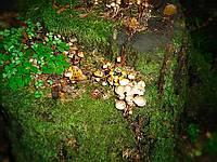 Неопознанный гриб