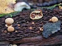 f:гнезда