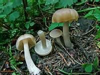 неопрознанный гриб